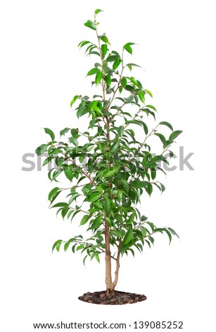 The young plant grows from a fertile soil is isolated on a white background - stock photo