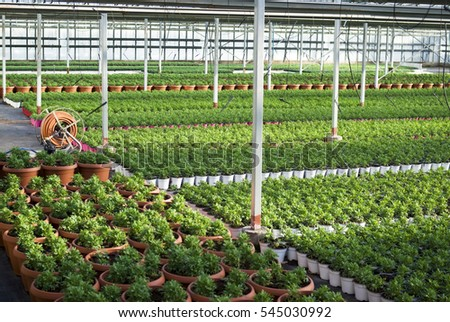 The young plants growing in a greenhouse