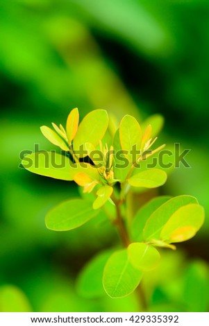 The young shoots of trees with green blur background
