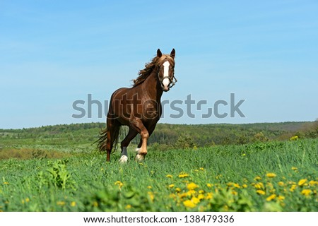 The young stallion in the pasture