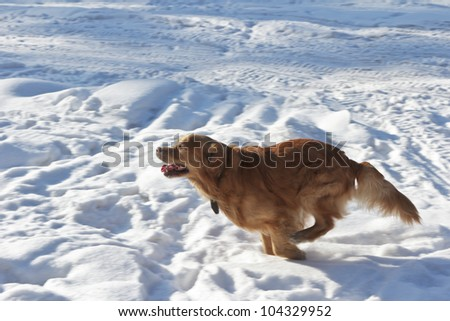 The young strong dog runs in a jump. Side view. - stock photo