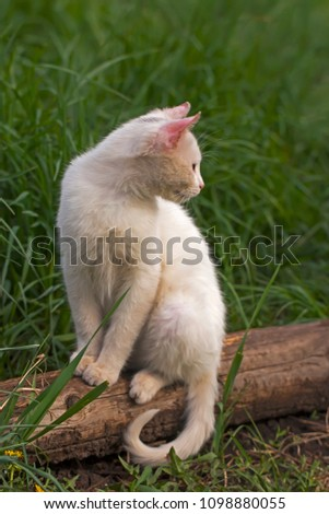 stock-photo-the-young-white-cat-sits-aga