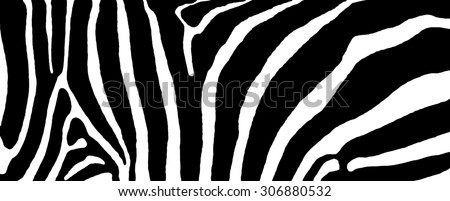 The Zebra stripes