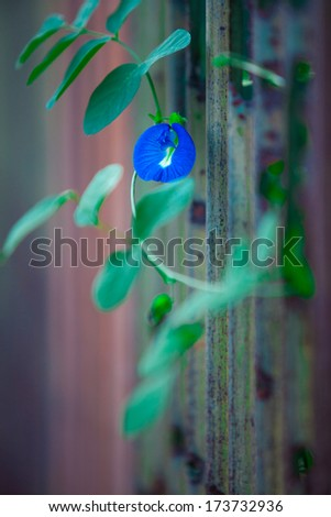 The zinc violet flowers - stock photo
