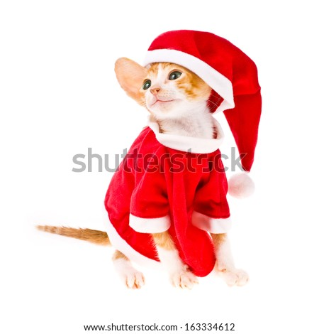 Theme New Year holidays and Christmas. little red kitten dressed as Santa Claus isolated on white background