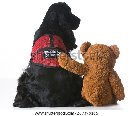 therapy dog being comforted by a teddy bear on white background - stock photo