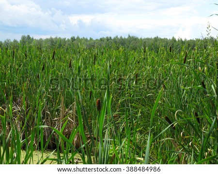 There are bog, green grass and forest in the distance - stock photo