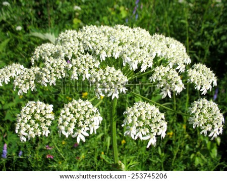 There are branch of a plant and white blossoming - stock photo