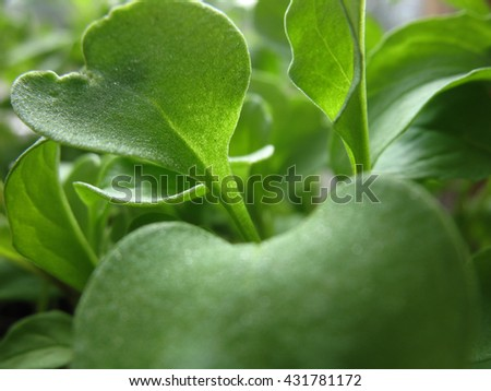 There  are green leaves and branches of a salad - stock photo