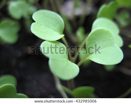 There  are green leaves of a plant. Macro - stock photo