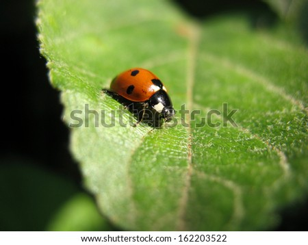 There are insect and plant. The ladybird  on green leaf. - stock photo