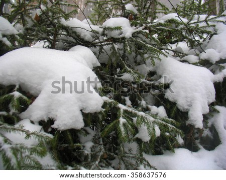 There are plants in snow. Winter forest