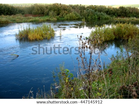 There are trees in a  forest and river - stock photo