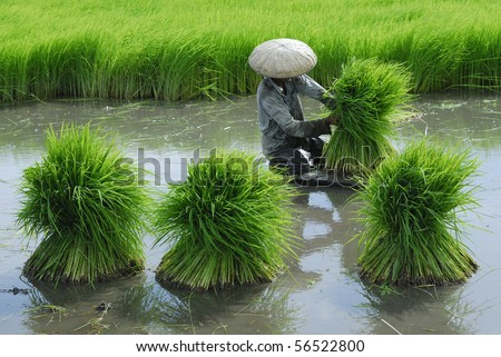There is a farmer working in the farm - stock photo