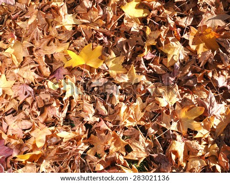 Thick carpet of Autumn leaves on the ground building a background, Melbourne, Australia      - stock photo