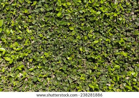 Thick green garden hedge pattern - stock photo