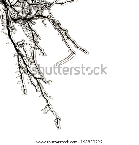 Thick ice on tree branches following freezing rain ice storm in Toronto, December 2013. - stock photo