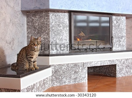 Thick striped cat about a fireplace - stock photo