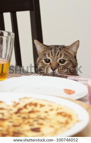 Thief cat - stock photo