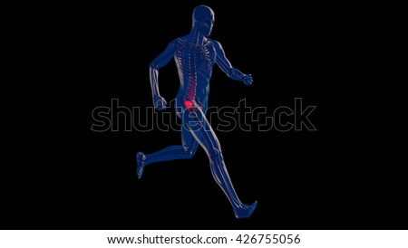 Thigh Femoral Head and Neck Pain in Human Body Transparent Design 3D Illustration - stock photo