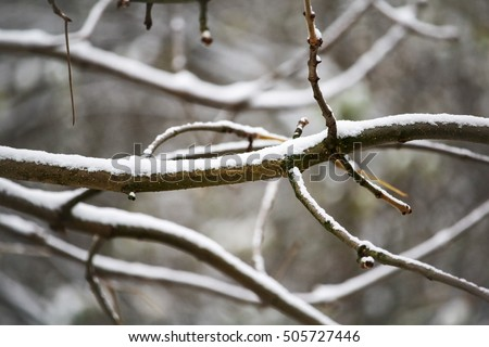 thin branches of birch under the first snow, macro, bokeh