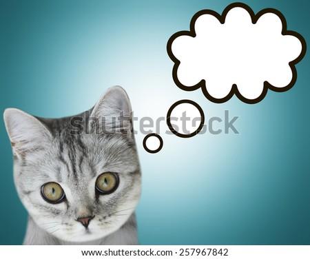 thinking cat - stock photo