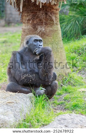 Thinking gorilla on a background of palm trees - stock photo