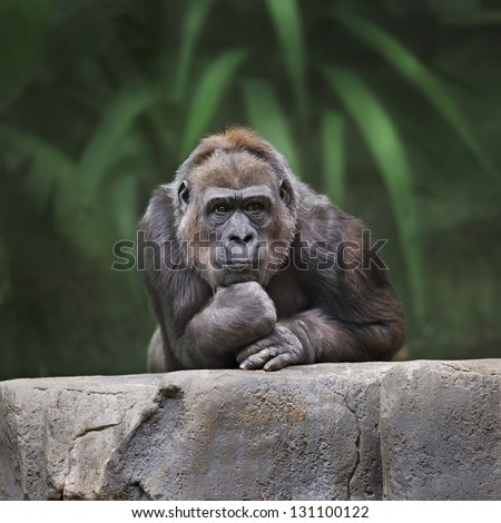 Thinking monkey - stock photo
