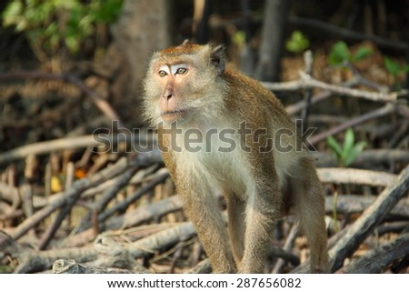 Thinking monkey in the wood. - stock photo