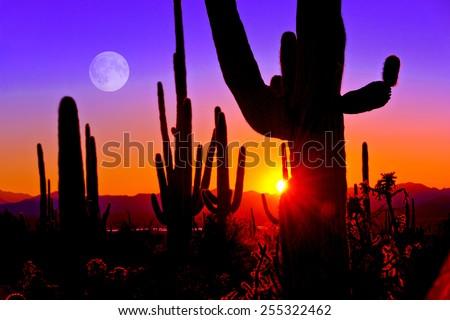 Third Sunset at Saguaro National Park near Tucson Arizona. - stock photo