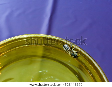 Thirsty honey bee searches for water on glass