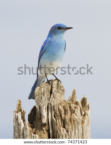 This bird was seen while driving along a country road. - stock photo
