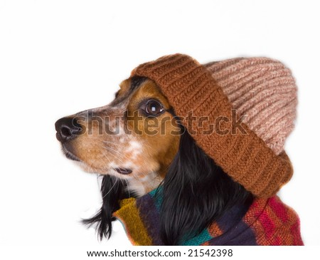 This dog is ready for winter