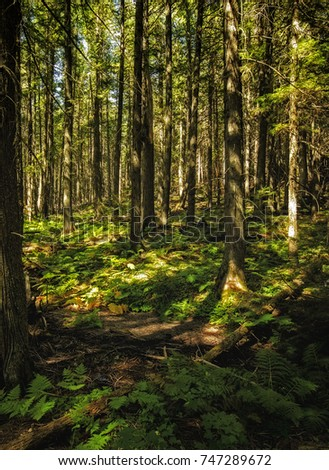 This forest floor scene is on the Trail of the Cedars in Glacier national park.