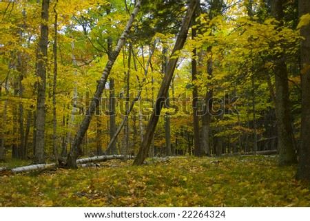 This image was captured along a hiking trail in the woods of Wisconsin's Potawatomi State Park in Door County. - stock photo
