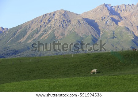 This is a green grassland and giant mountains stand behind. A sheep is eating grass. It is quite and beautiful.