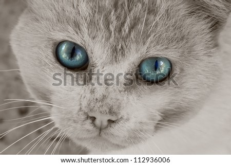 This is a photo of grey cat - stock photo