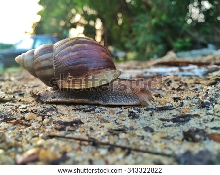 This is a small world of snail.  - stock photo