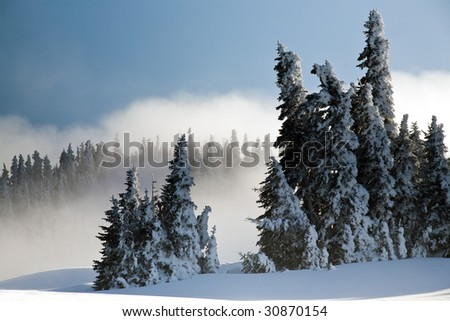 This is a view of snow covered trees on Hurricane Ridge in Olympic National park. - stock photo