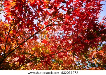 https://thumb9.shutterstock.com/display_pic_with_logo/167494286/632031272/stock-photo-this-is-autumn-leaves-in-the-japanese-garden-632031272.jpg