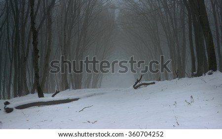 This is gloomy glade in Caucasus forest in winter - stock photo
