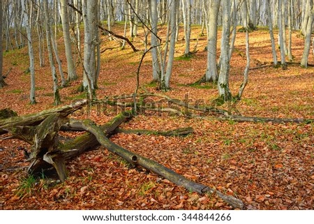 This is sunny morning in Caucasus forest in autumn