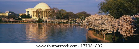 This is the Jefferson Memorial next to the Tidal Basin. Cherry blossoms bloom on the trees in the foreground. - stock photo