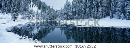 This is the Lake Tahoe area after a winter snow storm. There is snow covering the trees surrounding a stream. The winter trees are reflected in the stream. - stock photo