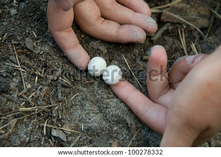 This is two eggs of sand lizard (Lacerta agilis). Eggs are very small in comparison with man's hand.