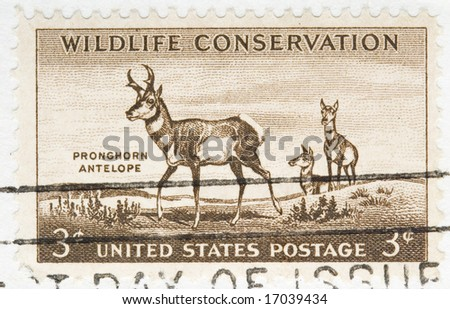 this is Vintage 1956 US Postage Stamp Wildlife Conservation Pronghorn antelope - stock photo