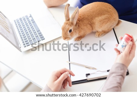 This medicine will cure my pet - stock photo