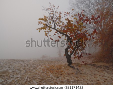 This photograph was taken in the autumn. Autumn frosty morning was very foggy. The fog cleared at sunrise. The sun had just risen. In the morning it was very cold. The trees were golden foliage.