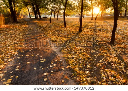 This serene walking path at sunrise in Autumn is lined with bright yellow fall leaves. Long shadows of the trees are cast from the rising sun, adding great lines and textures. - stock photo