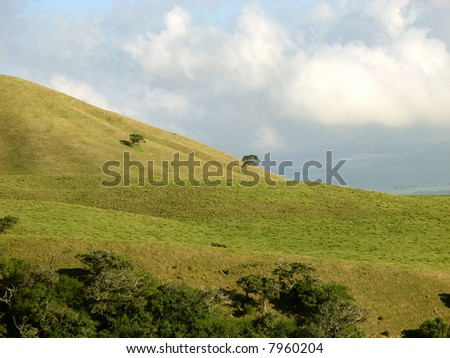 This shows two trees with plenty of room on an otherwise empty hill side. Taken on the Big Island Hawaii. - stock photo